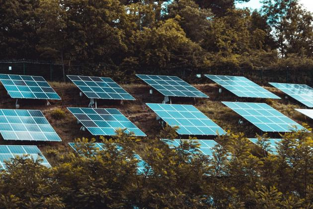 Solar panels in a forest